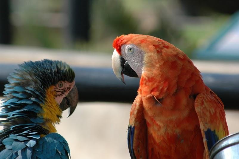 ЮАР, птичий сад
